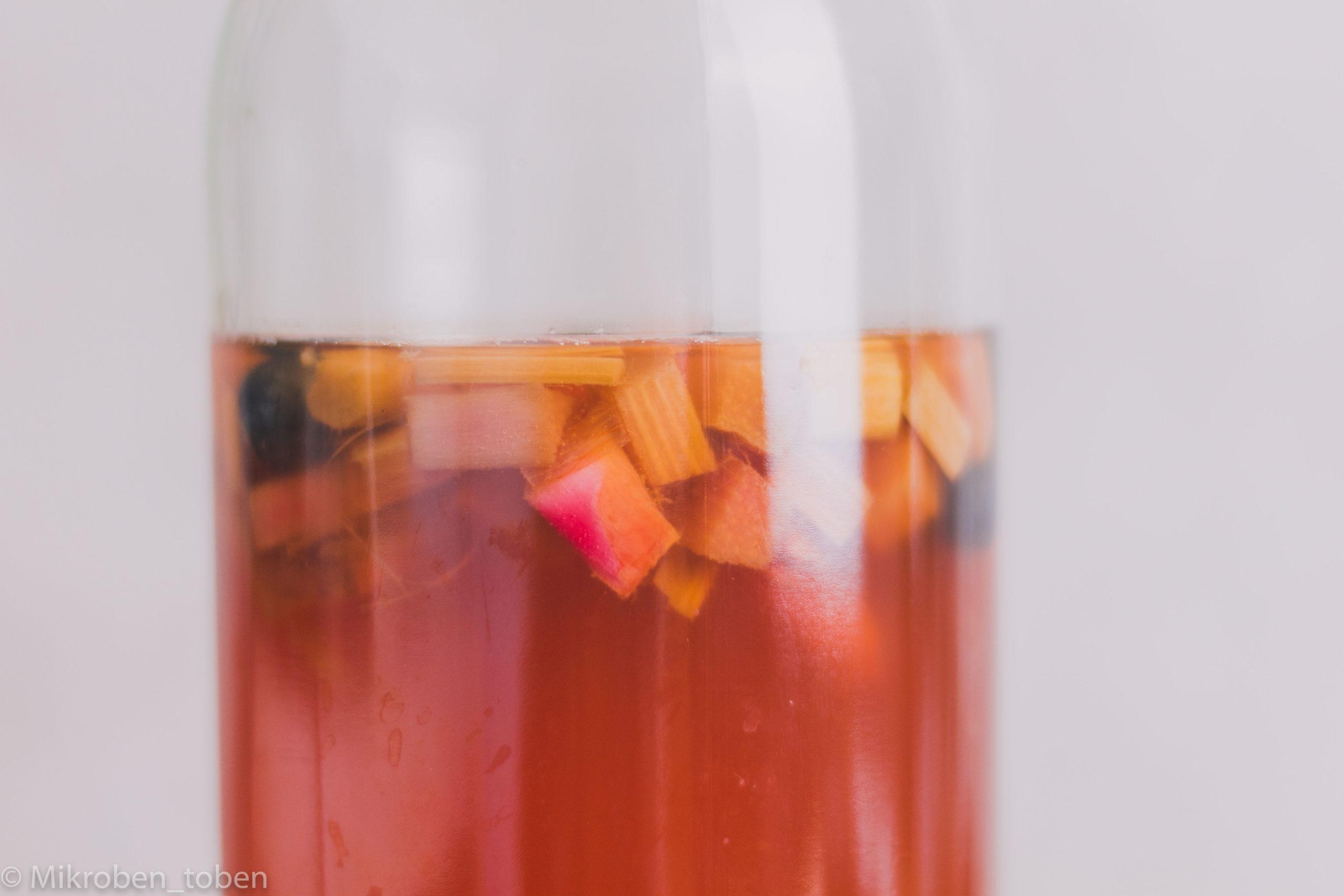 Kombucha mit Rhabarber-Geschmack
