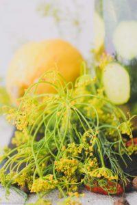 süß sauer fermentierte Gurken