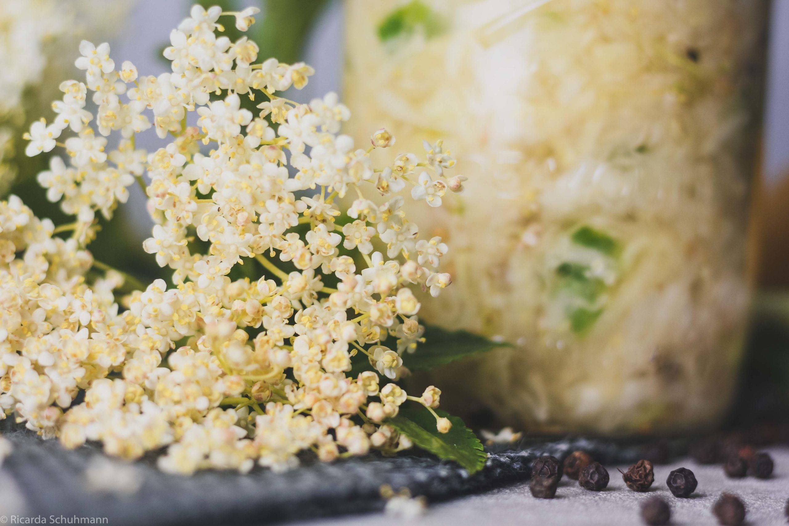 Sauerkraut mit Holunderblüten
